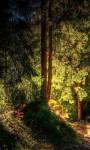 Rain Forest Live Wallpaper HD screenshot 5/5