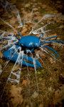 Blue Crab Free screenshot 1/5