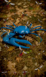 Blue Crab Free screenshot 2/5