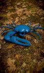 Blue Crab Free screenshot 3/5