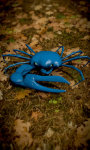 Blue Crab Free screenshot 4/5