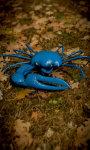 Blue Crab Free screenshot 5/5