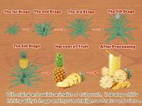 Baby Plants Fruits screenshot 1/4