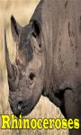 Rhinoceroses screenshot 1/3