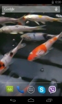 Koi Video HD Live Wallpaper screenshot 4/4