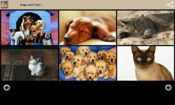 Dogs With Cats Wallpapers screenshot 1/6