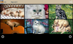 Dogs With Cats Wallpapers screenshot 3/6