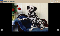Dogs With Cats Wallpapers screenshot 5/6