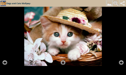 Dogs With Cats Wallpapers screenshot 6/6