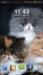 Persian Cat Wallpaper v2 screenshot 2/3
