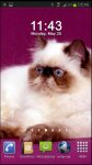 Persian Cat Wallpaper v2 screenshot 3/3