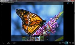 Amazing Beautiful Butterfly screenshot 1/4