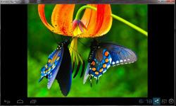 Amazing Beautiful Butterfly screenshot 3/4