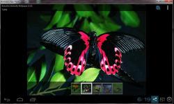 Amazing Beautiful Butterfly screenshot 4/4