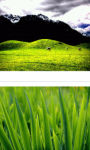 Grass view wallpaper HD screenshot 3/3