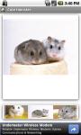 Cute Hamster screenshot 1/3