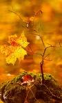 Autumn Tree Leaf LWP screenshot 2/3