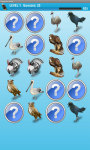 Dangerous Birds Game Free screenshot 3/4