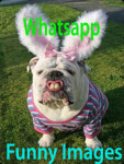 Whatsapp Funny Images 240x320Keypad screenshot 1/3