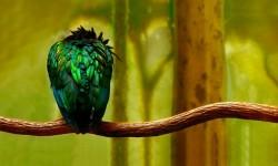 Birds HD Live Wallpapers screenshot 1/6