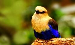 Birds HD Live Wallpapers screenshot 2/6