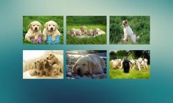 Jigsaw Puzzle Dogs screenshot 1/3