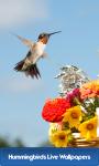 Hummingbirds Live Wallpapers screenshot 1/6