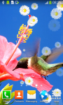 Hummingbirds Live Wallpapers screenshot 2/6