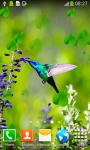 Hummingbirds Live Wallpapers screenshot 3/6