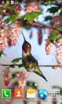 Hummingbirds Live Wallpapers screenshot 6/6