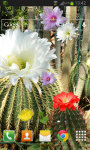 Cactus Flowers LWP screenshot 2/2