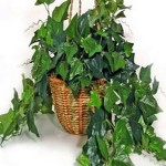 Plants That Purifies Air screenshot 1/1