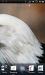 Awesome Bald Eagle Live Wallpaper screenshot 3/3
