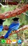 Forest Birds Live Wallpapers screenshot 5/6