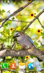 Forest Birds Live Wallpapers screenshot 6/6