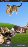 Cute Cats On Your Phone LWP FREE screenshot 3/5