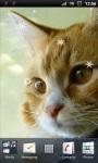 Cute Little Cat Live Wallpaper screenshot 1/3