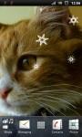 Cute Little Cat Live Wallpaper screenshot 2/3