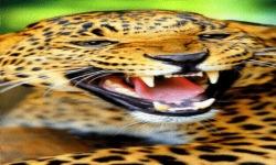Angry Leopard Live Wallpaper screenshot 2/3