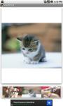 Lovely Pets Free screenshot 1/3