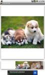 Lovely Pets Free screenshot 2/3
