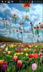Tulips LWP screenshot 2/3