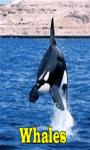 Whales Lite  screenshot 1/3