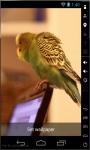 Parakeet Dance Live Wallpaper screenshot 1/2