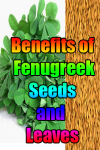 Benefits of Fenugreek Seeds and Leaves screenshot 1/3