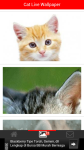 Free Cat Live Wallpaper screenshot 2/6