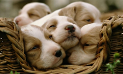 Cute Pups screenshot 2/6