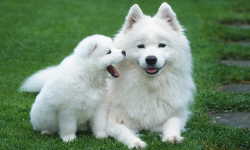 Cute Pups screenshot 3/6