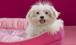 Cute Pups screenshot 4/6