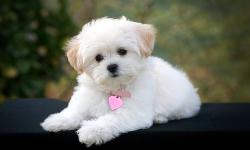 Cute Pups screenshot 5/6